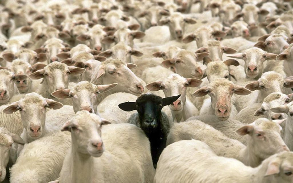 Opinion Polls and the Sheep Mentality